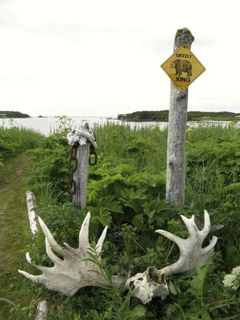 Katmai Wilderness Lodge : bear xing