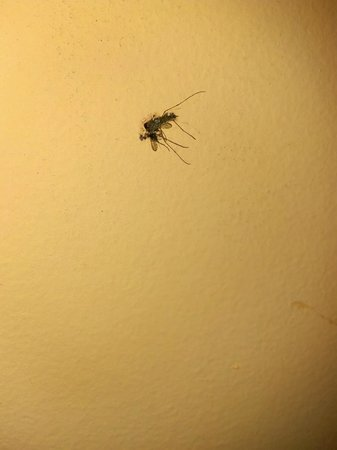 Beach Shack: One of several squashed bugs on the walls of our room!