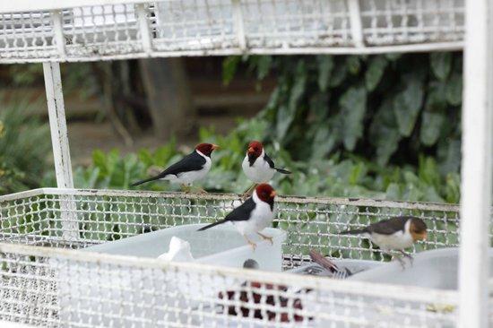 Araras Pantanal Ecolodge: Café da manhã