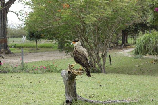 Araras Pantanal Ecolodge: na piscina