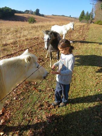 Mountain Splendour Eco-Resort: feeding the ponies next to the campground
