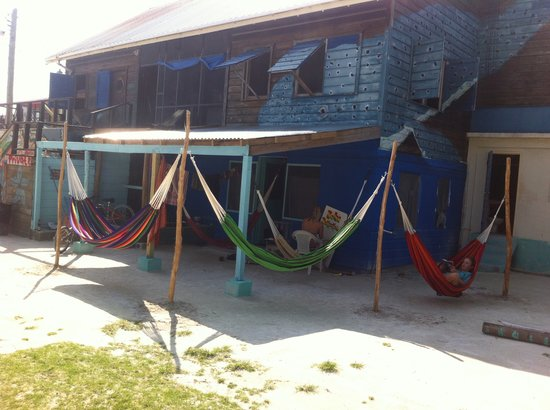 Bella's Backpackers: Hammock lounge