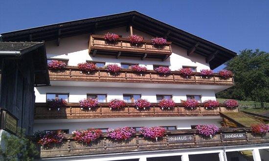 Ferienhaus Panorama: The flowers are fantastic