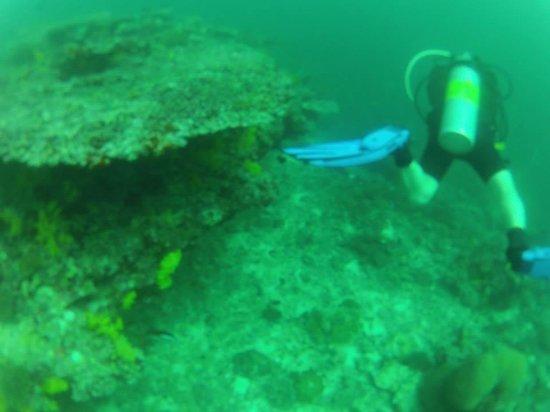 Coco Palm Dhuni Kolhu : Diving
