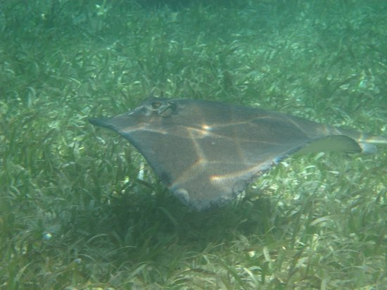 Anda De Wata Tours: Rays at shark ray alley