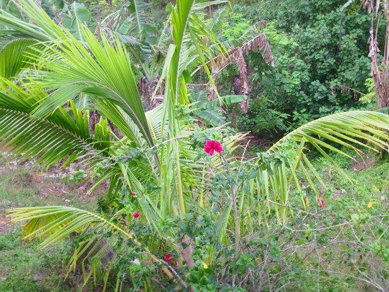 Kia Orana Bungalows: hibiscus