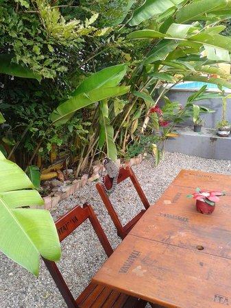 Che Lagarto Hostel Paraty: Monito