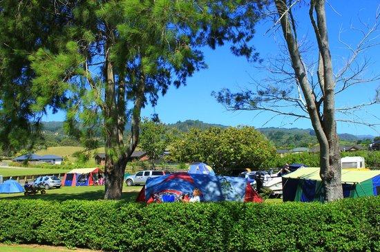 Coromandel TOP 10 Holiday Park: Non Powered Camp Sites
