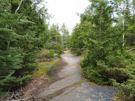 Misery Bay Provincial Park: A typical alvar environment: exposed bedrock and thin soil.