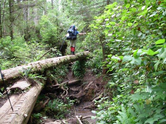 West Coast Trail: Log Crossing