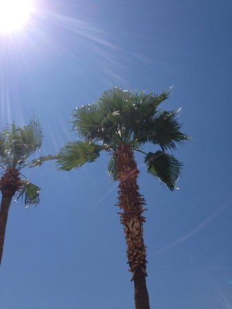 Residence Inn Tucson Williams Centre: Trees by the poolside.
