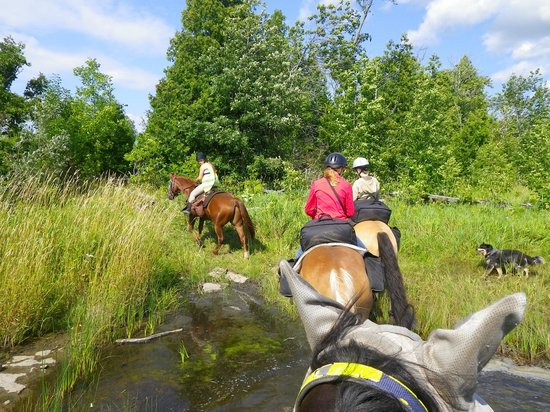 Honora Bay Riding Stables: At the lake, letting the horses get a drink of water