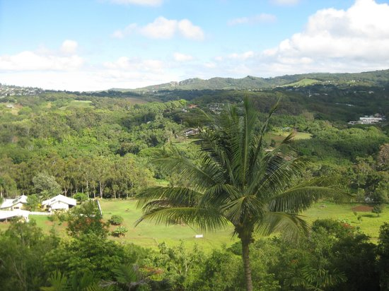 Marjorie's Kauai Inn: In the jungle - the view from the balcony