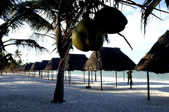 Sunrise Beach Resort : The Beach