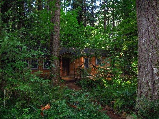 Cedarwood Lodge : Cabin #2