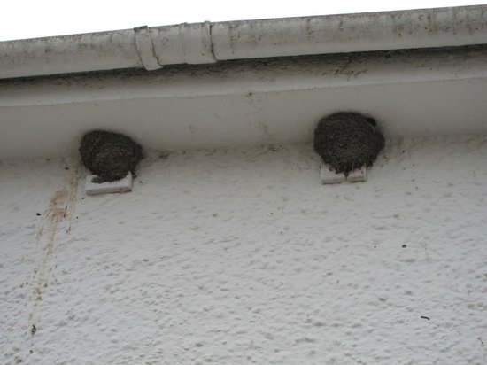 McMurdoston House: Nesting birds - lovely - I could see chicks heads poking out!