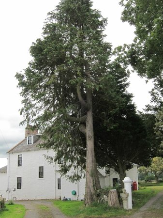 McMurdoston House: View of house