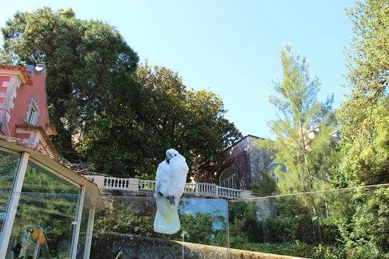 Quinta das Murtas: Parrots