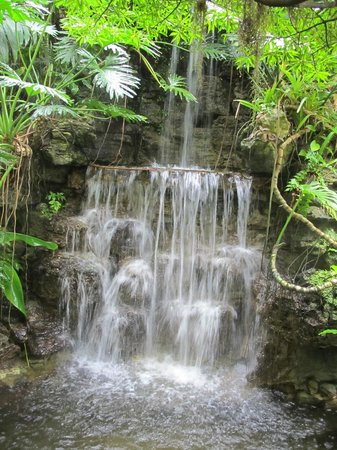 Krohn Conservatory : *A place to relax