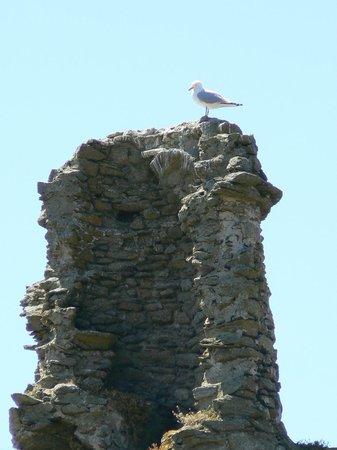 Vieux-château de Île d'Yeu : le vieux château de l'Ile d'Yeu