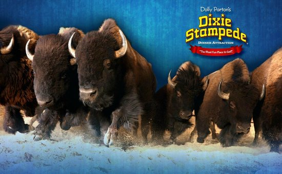Dixie Stampede Dinner Amp Show In Pigeon Forge Tn Is Fun