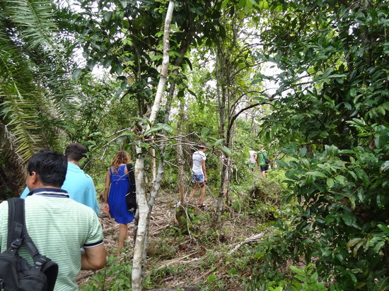 Jozani Forest Reserve : The Walk Inside the Jungle