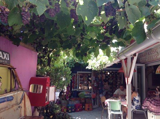 Kitsch Cafe: Under grape vine