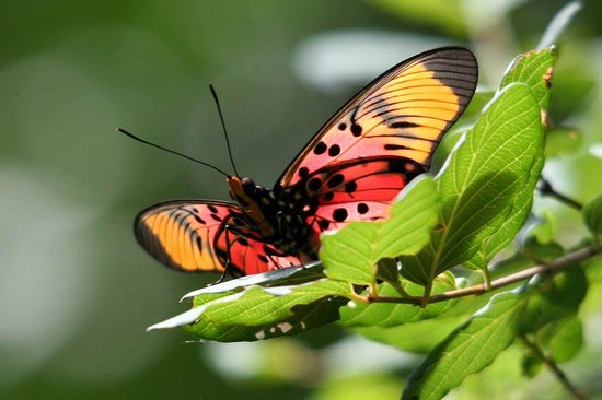 Mashovhela Bush Lodge: Butterfly Hotspot