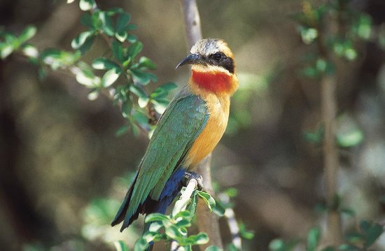 Mashovhela Bush Lodge: Birding