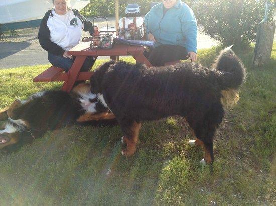 Dockside Restaurant: Full doggy service