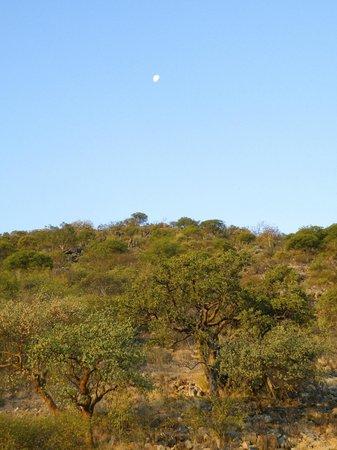 Damara Mopane Lodge: View from Platform