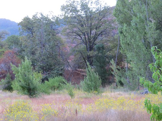 Kings Canyon Lodge: Area is full of trees