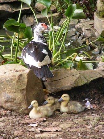Establo San Rafael B&B: duck pond