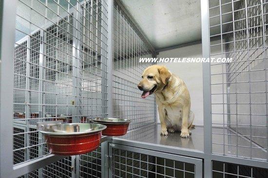 Hotel Spa Norat O Grove: Mascotas - Pets rooms