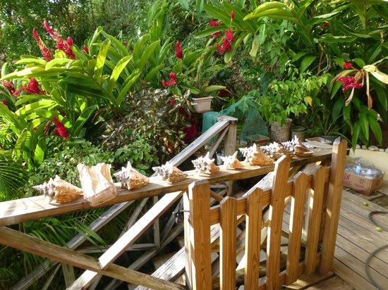 Carpe Diem Villa: Sloping garden alongside the property.