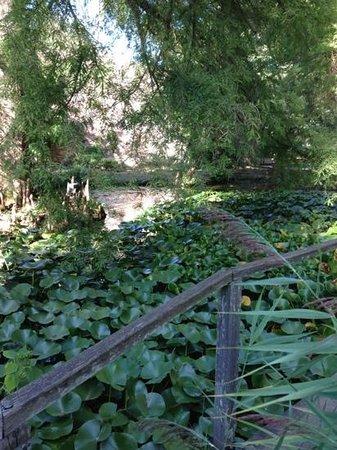 Orto Botanico di Lucca : laghetto