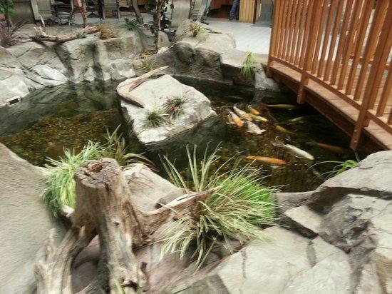 C'mon Inn - Grand Forks: Koi Pond