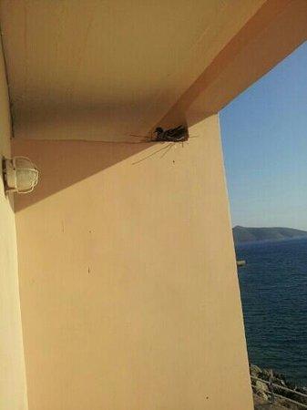 El Greco Hotel : piccione con nido