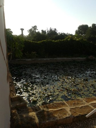 Oasis Guesthouse: frog pool