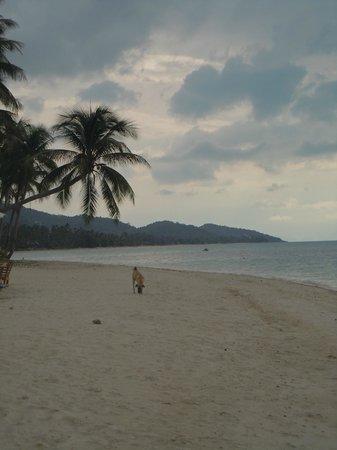 Mimosa Resort & Spa: A falling palm