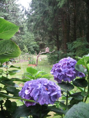 Cape Lookout Bed n Breakfast: More gardens