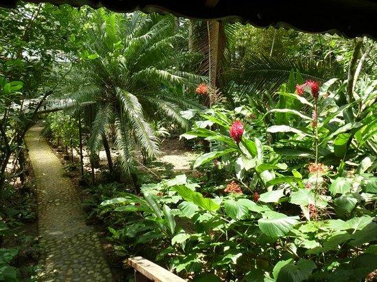 Cabinas Punta Uva: desde la ventana de la habitación, un jardín increíble