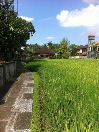 Kebun Indah : chemin vers l'hôtel depuis la rue