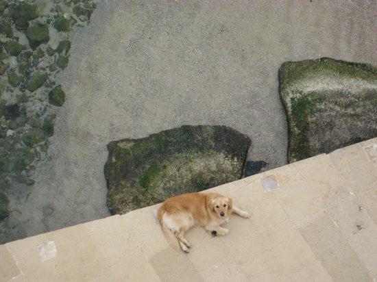 Musciara Siracusa Resort: glasklares Wasser mit Buddy