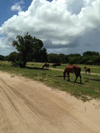 At the Waves: Wild horses everywhere ~
