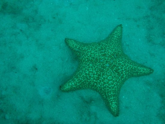 At the Waves: Starfish, Puffers, Stingrays, Sea turtles, Lobster and many other great finds!