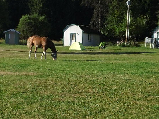 Amber Bear Inn: Shelby the horse guarding Kevin S's campsite