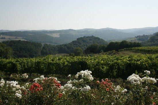 Fattoria Il Piano: Aussicht über die Weinberge