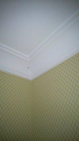 Ballathie House Hotel: spiders web on cornice