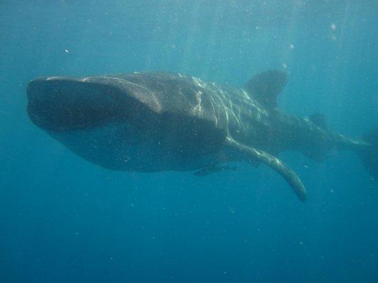 Bahia Divers: INCREIBLE!